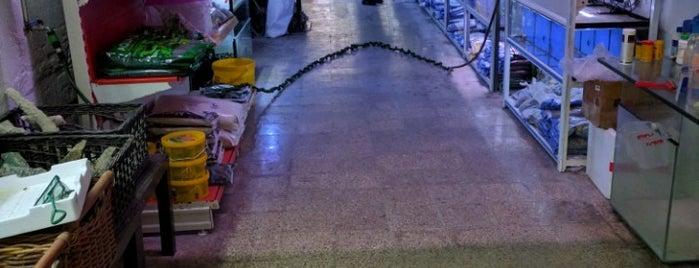 Aquaris Condal is one of Tiendas Acuariofilia Barcelona.