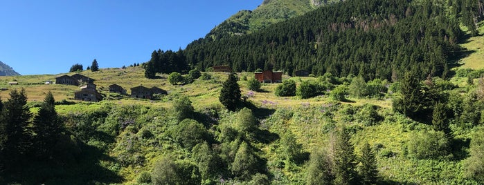 Palovit Yaylasí is one of Mountain Resorts In Black Sea Region.