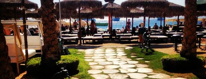 Dream Beach is one of Sofia'nın Beğendiği Mekanlar.