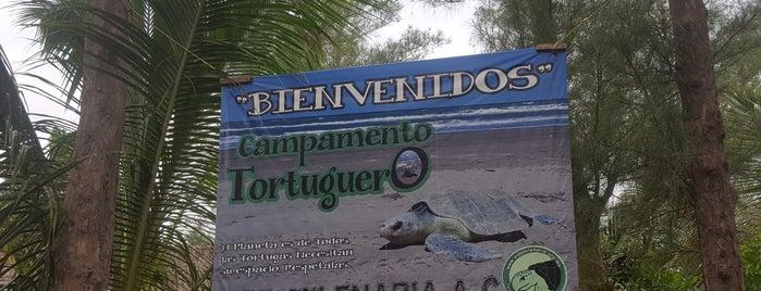 Playa de Tecolutla is one of Omar : понравившиеся места.