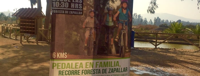 La Foresta de Zapallar is one of Tempat yang Disukai Eduardo.