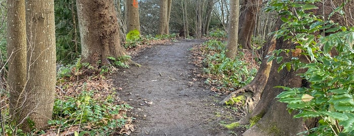 Leschi-Lake Dell Natural Area is one of Seattle's 400+ Parks [Part 1].