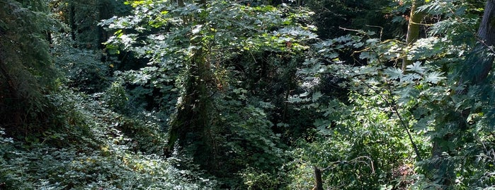 Madrona Ravine is one of Seattle's 400+ Parks [Part 2].