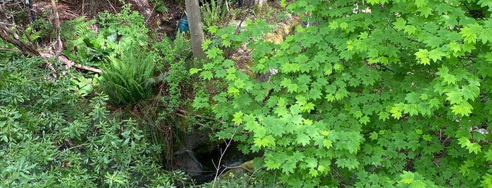 Fauntleroy Creek Ravine is one of Seattle's 400+ Parks [Part 1].