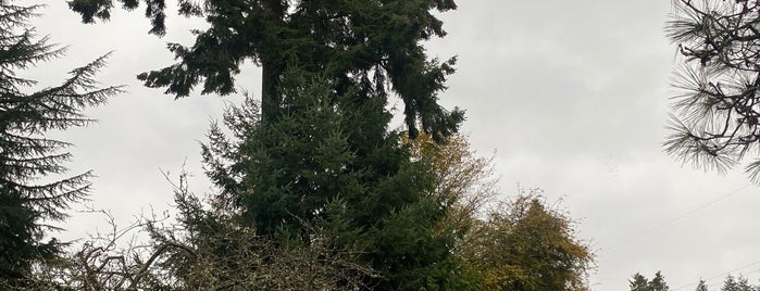 Wedgwood Square is one of Seattle's 400+ Parks [Part 2].