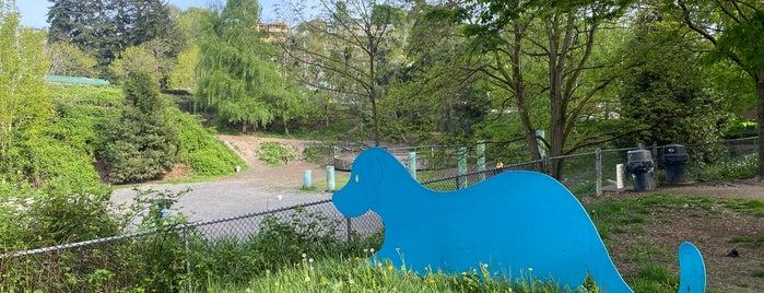 Blue Dog Pond Park is one of Dog Parks.