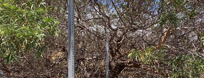 Koaia Tree Sanctuary is one of Hawai'i.