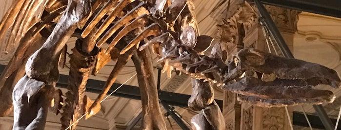 Natural History Museum is one of Sam 님이 좋아한 장소.