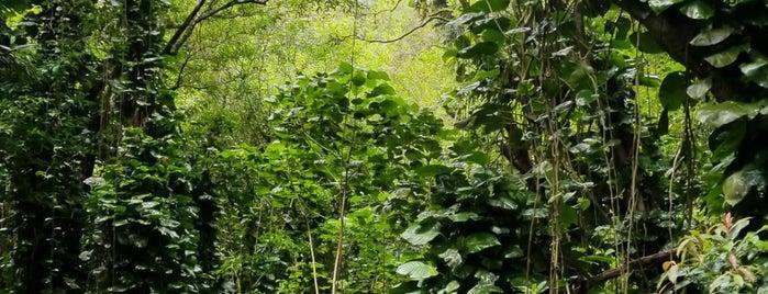 Pu'u Pia Trail is one of oahu.