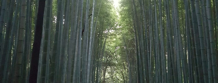 Arashiyama Bamboo Grove is one of Katrina : понравившиеся места.