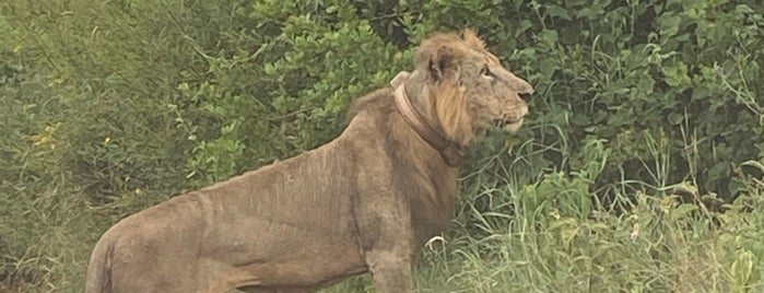 Nairobi National Park is one of Kenya.