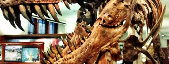 Naturhistorisk Museum is one of Oslo City Guide.