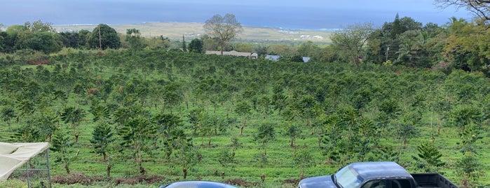 Hula Daddy Coffee is one of To-Do Hawaii 🌈.