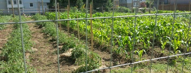 Morning Star Community Gardens is one of #UrbanGrown Farms & Gardens Tour.