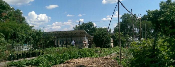 The Urban Farming Guys Myrtle Plot is one of #UrbanGrown Farms & Gardens Tour.