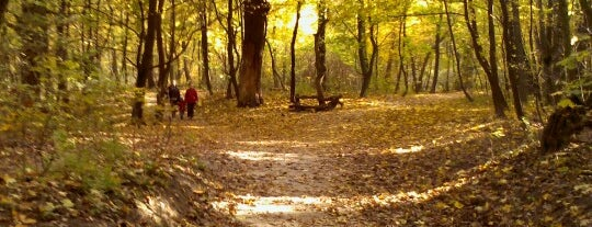 Голосіївський парк ім. Максима Рильського is one of Ксения 님이 좋아한 장소.
