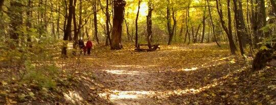 Голосіївський парк ім. Максима Рильського is one of Igorさんのお気に入りスポット.