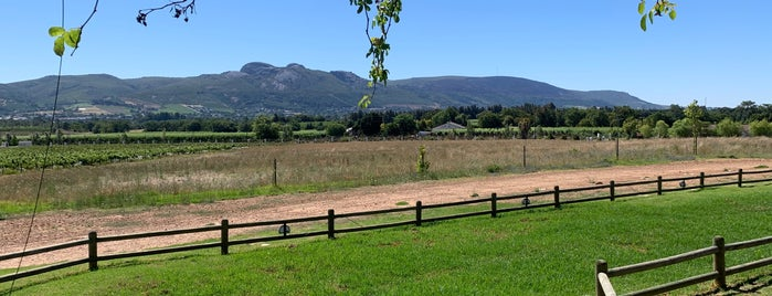 Avondale Wines is one of wineries.