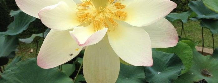 Queen Sirikit Botanic Garden is one of Chiang Mai.
