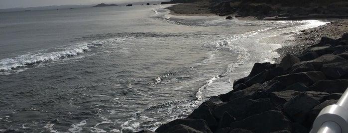 SEAFIELD | Beach is one of Martins : понравившиеся места.
