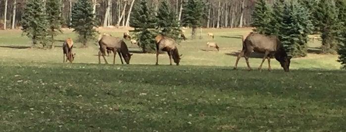 Elk Country Visitor Center is one of Orte, die HutcH gefallen.