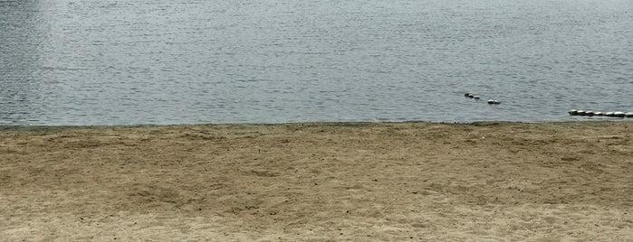 Gull Park is one of Tempat yang Disukai Roy.