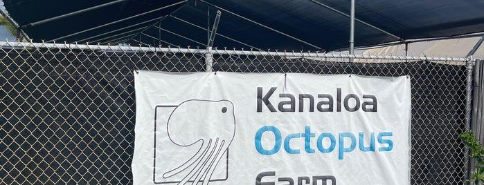 Kanaloa Octopus Farm is one of HAWAII.
