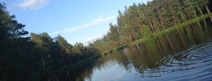 оз. Лесное («Радоновое») is one of Искусство и природа!.