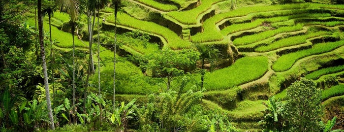 Tegallalang Rice Terraces is one of The Island of the Gods.