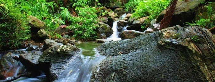 El Yunque National Forest is one of Exploring Puerto Rico.