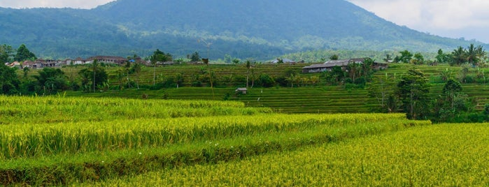 Jatiluwih Rice Field is one of The Island of the Gods.