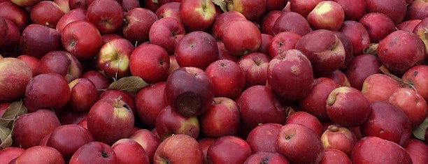 Eckert's Belleville Country Store & Farm is one of Excellent Farms for Apple Picking.