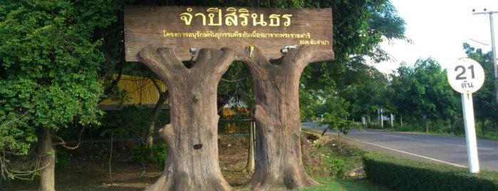 สวนป่าจำปีสิรินธร is one of ลพบุรี สระบุรี.