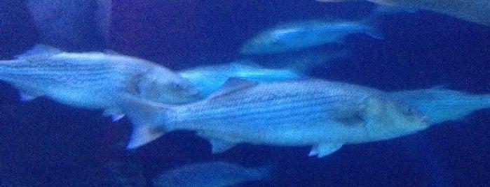 Aquarium of the Bay is one of Ocean Love.