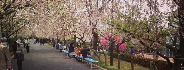 東谷山フルーツパーク is one of East Nagoya.