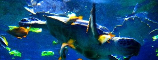 Turtle Reef is one of Mme. 님이 저장한 장소.