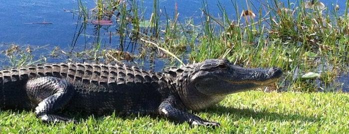 Everglades Safari Park is one of Miami.