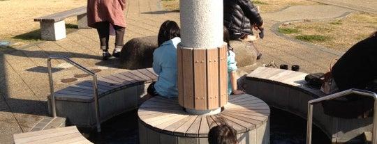 まどが浜海遊公園 is one of 伊豆.