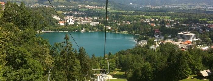 Pustolovski Park Bled (Adventure Park Bled) is one of Slovenia 2013.