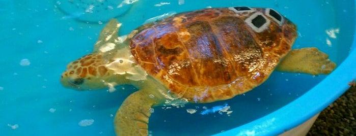 Georgia Sea Turtle Center is one of Tempat yang Disimpan Sue.