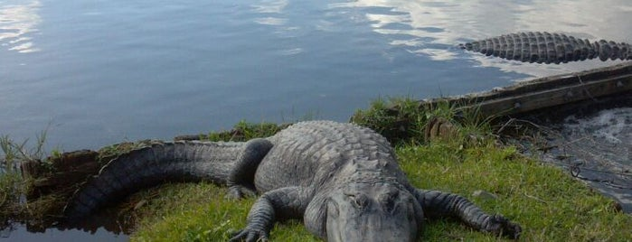 Gatorland is one of Floridas Top Spots.