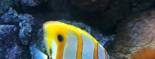 Aquarium van Brussel is one of Partners and discounts.
