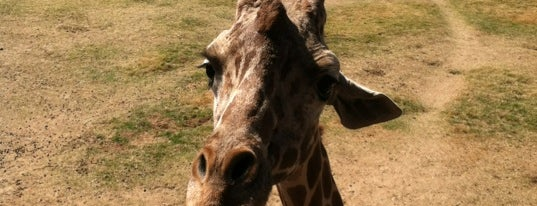 Wildlife World Zoo, Aquarium & Safari Park is one of Places to Check Out in Phoenix.
