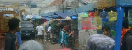 Animal Black Market Jatinegara is one of Indonesia.