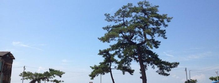 渋川海岸 is one of 日本の白砂青松100選.
