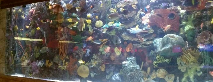The Mirage Aquarium is one of Day With The Kids.
