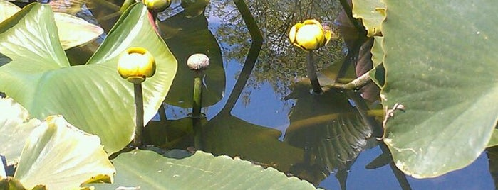 Newton Lake Park is one of Gespeicherte Orte von JASON.