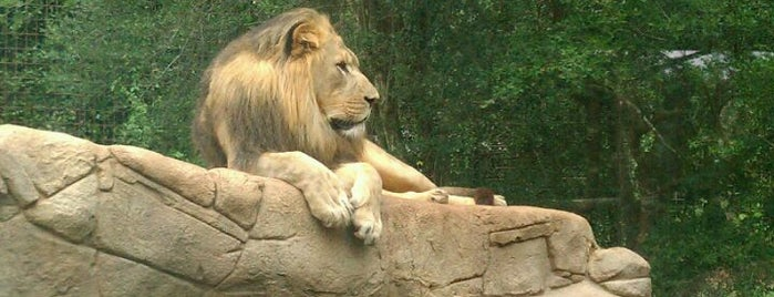 Greenville Zoo is one of Best Places to Check out in United States Pt 1.