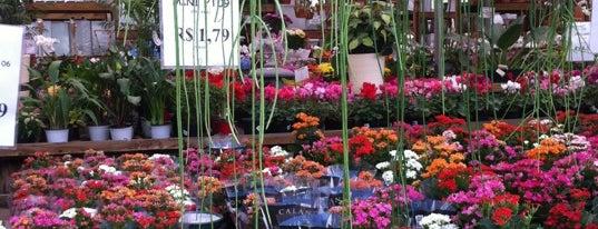 Ponto Garden is one of Lieux qui ont plu à Nicoli.