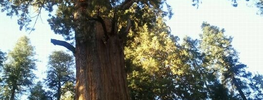 Sequoia National Park is one of Places I've been.